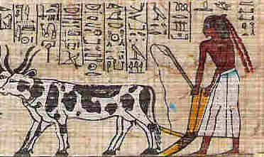 Farmer Plowing his Field